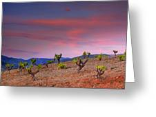 Vineyards At Sunset In Spain Greeting Card