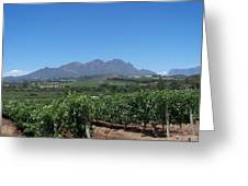 Vineyards Cape Town Greeting Card