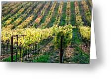 Vineyards In Healdsburg Greeting Card by Charlene Mitchell