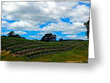 Vineyards In Paso Robles Greeting Card