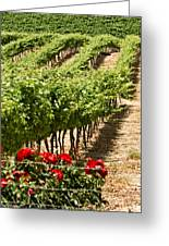 Vineyards In The Galilee  4 Greeting Card