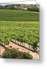 Vineyards In The Galilee Greeting Card