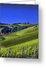 Vineyards Of Jerusalem Slovenia Greeting Card