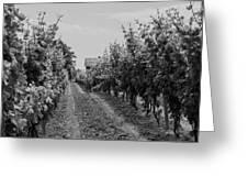 Vineyards Of Old Horizontal Bw Greeting Card