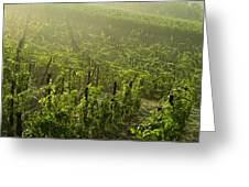 Vineyards Shrouded In Fog Greeting Card