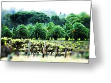 Vino Palmetto Greeting Card