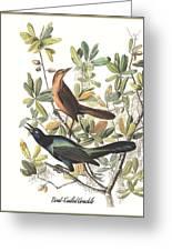 Vintage Boat-tailed Grackles Audubon Greeting Card