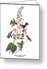 Vintage Columbian Humming Bird Audubon Greeting Card