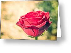 Vintage Film Effect Rose. Greeting Card