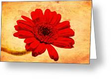 Vintage Gerbera Daisy Greeting Card
