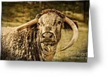 Vintage Longhorn Cattle Greeting Card