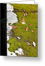 Vintage Moss Greeting Card