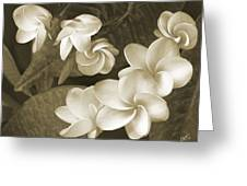 Vintage Plumeria Greeting Card