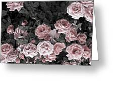 Vintage Roses In Pink 2  Greeting Card