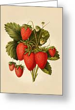 Vintage Strawberries Greeting Card