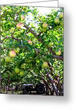 Vintage Tractor In Apple Orchard Greeting Card by Will Borden