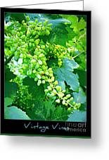 Vintage Vines  Greeting Card