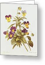 Viola Tricolour  Greeting Card by Pierre Joseph Redoute