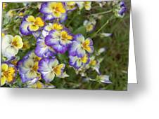 Violas Greeting Card