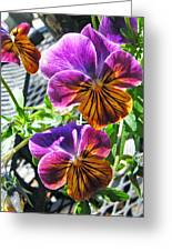 Violas Greeting Card