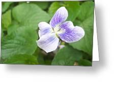 Violet 1 Greeting Card
