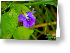 Violet After The Rain  Greeting Card