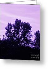 Violet And Black Trees  Greeting Card