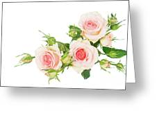 Garden Roses And Buds Greeting Card