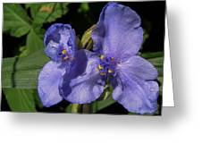 Violet Blooms Greeting Card