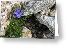Violet Climbing  Greeting Card
