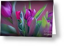 Violet Colored Tulips Greeting Card