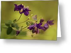 Violet Columbines Greeting Card