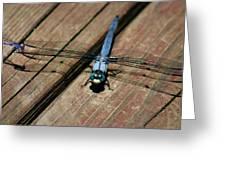 Violet Dancer On A Great Blue Skimmer Greeting Card