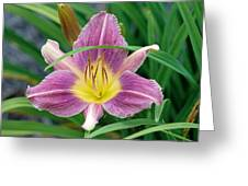 Violet Day Lily Greeting Card