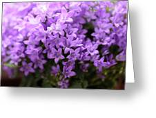 Violet Dream I Greeting Card