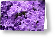 Violet Dream II Greeting Card