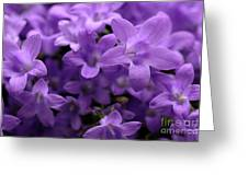 Violet Dream IIi Greeting Card