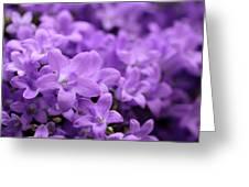 Violet Dream V Greeting Card
