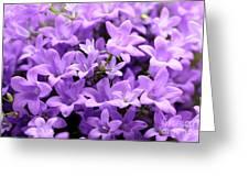 Violet Dream Vii Greeting Card