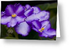 Violet Dreams Greeting Card