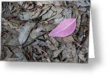 Violet Leaf On The Ground  Greeting Card