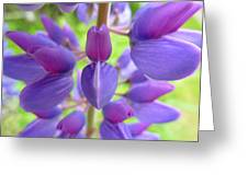 Violet Lupin Greeting Card