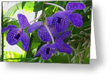 Violet Orchid Trio Greeting Card