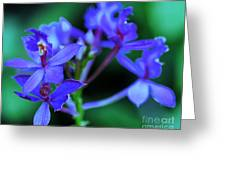 Violet Orchids Greeting Card