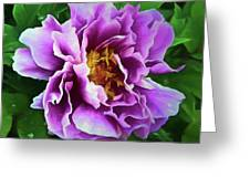 Violet Peony Greeting Card