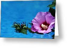Violet Satin Greeting Card