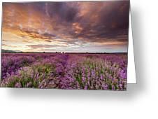 Violet Sunrise Greeting Card