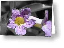 Violet Trumpet Vine Selective Color Greeting Card