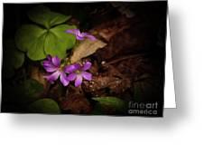 Violet Wood Sorrel Greeting Card