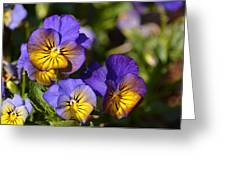 Violets 15-01 Greeting Card